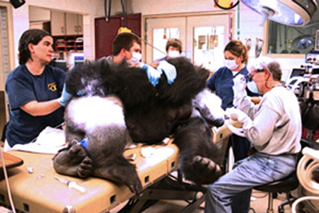 Dr. John Scheels - Exotic Animal Dentistry